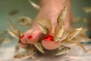 APTOPIX Fish Pedicures
